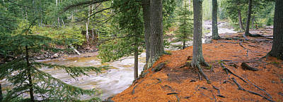 River Flowing Through A Forest Print by Panoramic Images