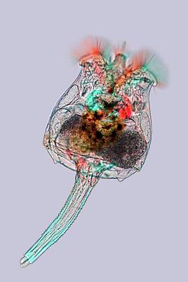 Rotifer Print by Marek Mis