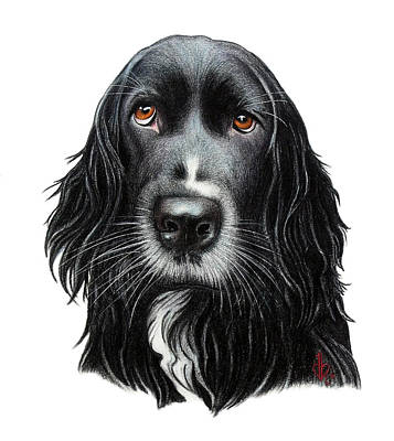 Black Labrador Drawing - Rummy by Danielle R T Haney