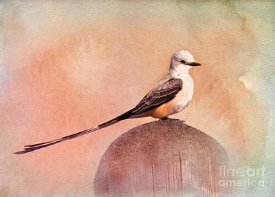 Flycatcher Digital Art - Scissor-tailed Flycatcher by Betty LaRue
