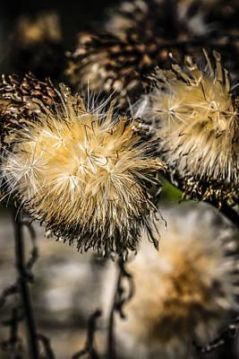 Seeds Original by Chris Smith