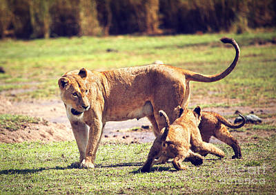 Lion Photograph - Small Lion Cubs With Mother. Tanzania by Michal Bednarek