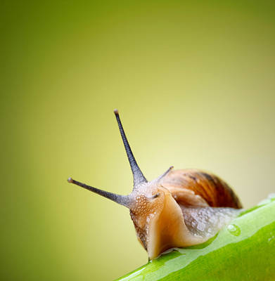 Snail On Green Stem Print by Johan Swanepoel