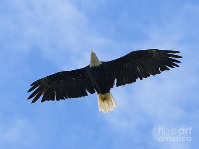 Eagle Digital Art - Soaring High 2 Hdr by Sharon Talson