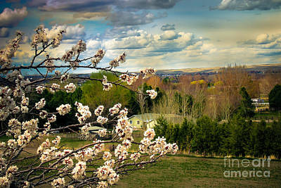 Spring Time Print by Robert Bales
