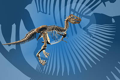 T-rex Digital Art - T. Rex Dinosaur Skeleton by Carol and Mike Werner
