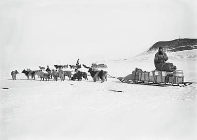 Husky Photograph - Terra Nova Antarctic Exploration by Scott Polar Research Institute