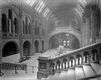 Nineteenth Century Photograph - The Natural History Museum by Natural History Museum, London