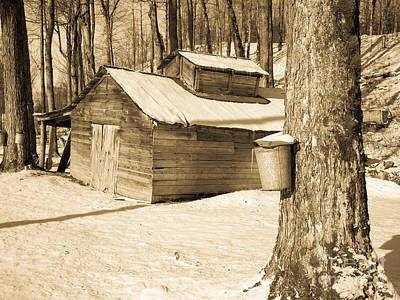 The Old Sugar Shack Print by Edward Fielding