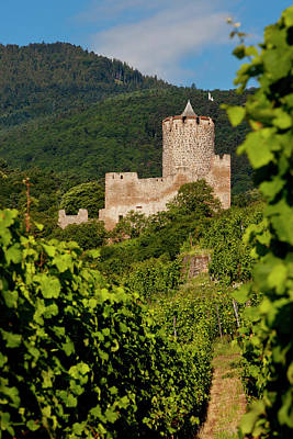 Grand Cru Photograph - The Ruins Of The Kaysersberg Chateau by Brian Jannsen