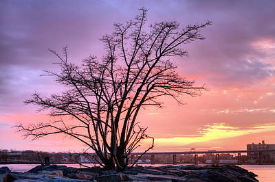 Boro Photograph - The Tree by JC Findley