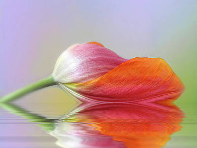 Tulip Digital Art - Thirst by Jessica Jenney