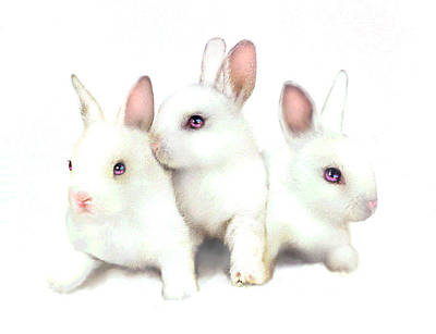 Fuzzy Digital Art - Three Bunnies by Robert Foster