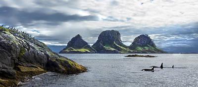 Orca Digital Art - Thrinacia by Finn Olav Olsen