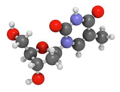 Deoxyribonucleic Acid Photograph - Thymidine Nucleoside Molecule by Molekuul