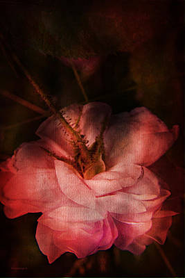 Red Flowers Photograph - Time Of Roses by Theresa Tahara