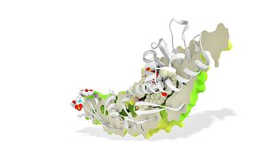 Torcetrapib And Cholesterol Print by Ramon Andrade 3dciencia