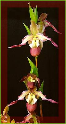 Orchids Digital Art - Tropical Orchids by Mindy Newman