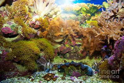Soft Photograph - Underwater Life by Michal Bednarek
