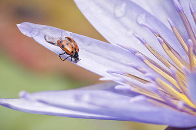 Ladybug Photograph - Unfurling For Flight by Priya Ghose