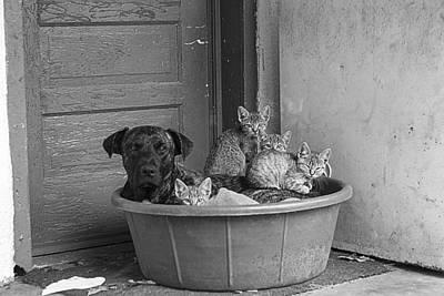 Murray Kentucky Photograph - Unlikely Friends by Amber Kresge