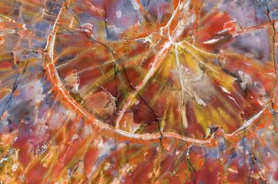 Usa, Arizona Close-up Of Petrified Wood Print by Jaynes Gallery