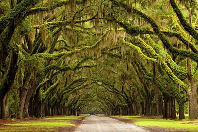Georgia Plantation Photograph - Usa, Georgia, Savannah, Oak Lined Drive by Joanne Wells
