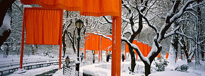 Bare Trees Photograph - Usa, New York, New York City, Central by Panoramic Images