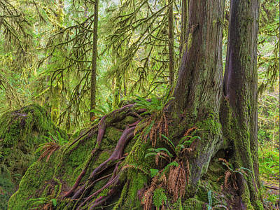 Cedar Park Photograph - Usa, Washington State, Olympic National by Jaynes Gallery