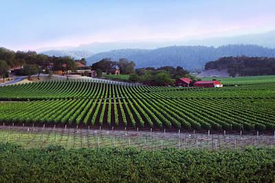 Wine Photograph - Vineyard 29 by Xueling Zou