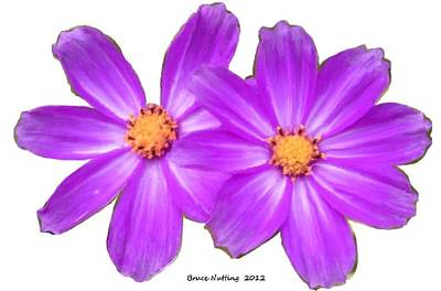 Flower Painting - Violet Asters by Bruce Nutting