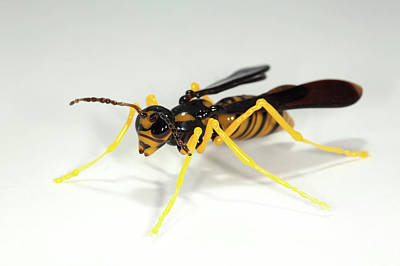 Wasp Print by Tomasz Litwin