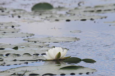 Foliage Photograph - Water Lily 2 by Cathy Lindsey