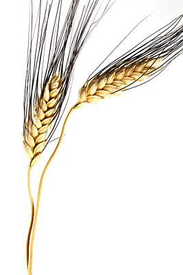 Wheat On White Print by Carol Leigh