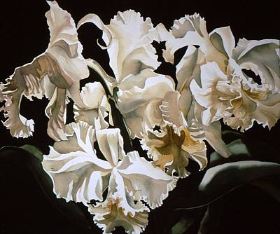 white Cattleya orchids Print by Alfred Ng