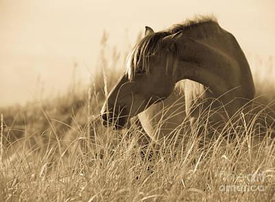 Wild Horse Photograph - Wild Horse On The Beach by Diane Diederich