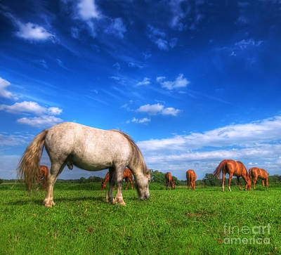 Horse Photograph - Wild Horses On The Field by Michal Bednarek
