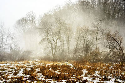 Winter Fog And Trees Print by Thomas R Fletcher