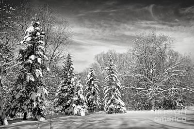 Frost Photograph - Winter Landscape by Elena Elisseeva