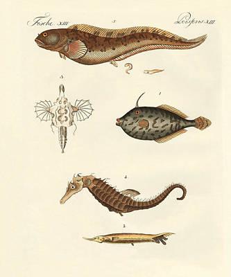 Unicorn Drawing - Wonderful Fish by Splendid Art Prints