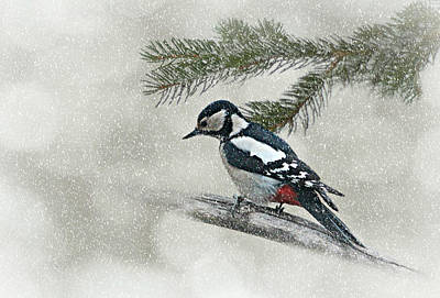 Winter Storm Mixed Media - Woodpecker by Heike Hultsch