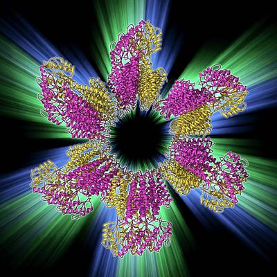 Molecular Structure Photograph - Zinc Transporter Yiip Molecule by Laguna Design