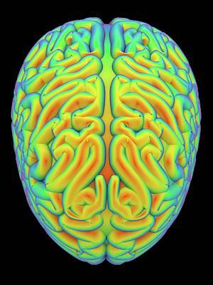 Human Brain Photograph - Human Brain by Alfred Pasieka