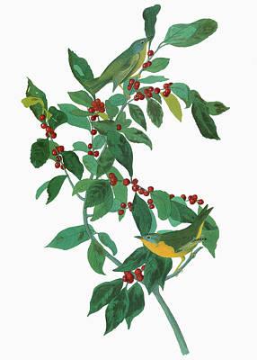 Nashville Painting - Audubon Warbler by Granger