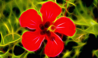 Flowers Digital Art - Flowers Digital Arts Pictures by Michael Vicin