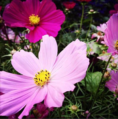 Pretty Flowers Photograph - Flowers by Les Cunliffe