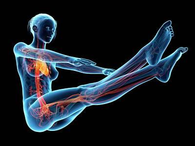 Human Vascular System Print by Sebastian Kaulitzki