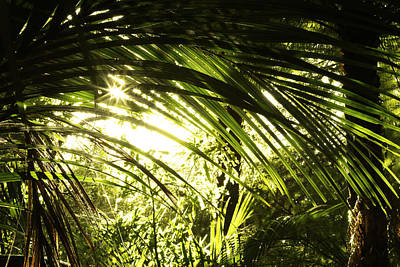 Tropical Forest Print by Les Cunliffe