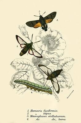 Butterflies Print by English School