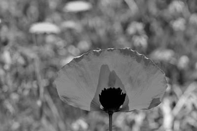 Springtime Photograph - Poppy Flower by George Atsametakis